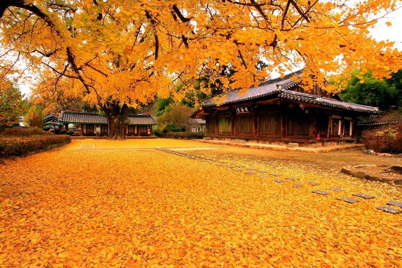 Chia sẻ bộ ảnh nền bốn mùa   Xuân - Hạ - Thu - Đông, độ phân giải từ 1080p đến 4K dành cho máy tính