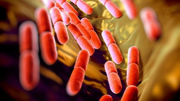 Điều trị từ nhiễm trùng cho tới ung thư: Vi khuẩn đường ruột có thể thay đổi cả ngành dược phẩm