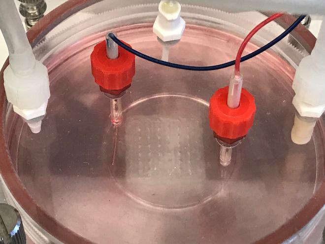 Bước tiến mới của in 3D sinh học: tạo ra cả mảng mô tim người có khả năng cấy ghép