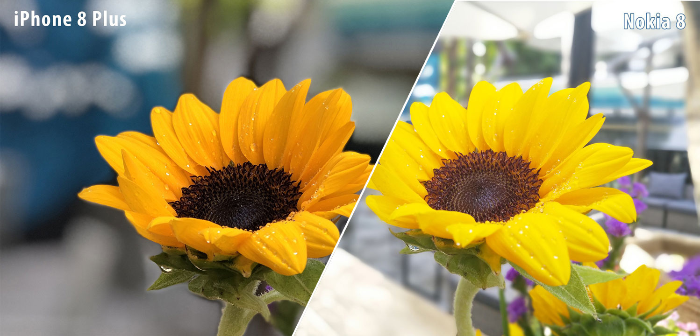 So sánh hiệu ứng làm mờ phông nền ảnh chụp trên Nokia 8 và iPhone 8 Plus